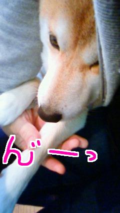 あまえんぼ1.jpg